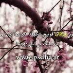 فوتیج شکوفه های بهاری صورتی
