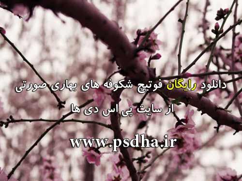 فوتیج شکوفه های بهار