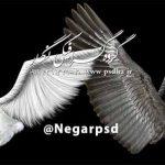 دانلود بال پرنده و فرشته psd سیاه و سفید