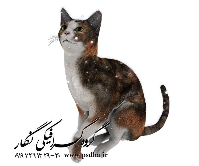 دانلود رایگان عکس گربه با کیفیت دوربر شده