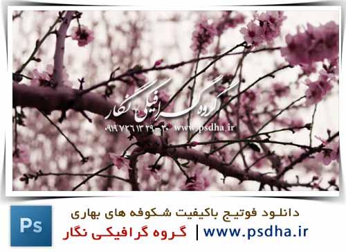 فوتیج باکیفیت شکوفه های بهاری