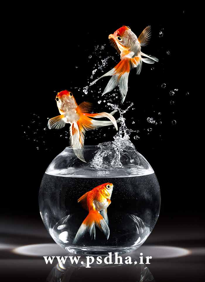 عکس ماهی قرمز عید نوروز در تنگ ماهی با کیفیت عالی