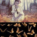 دانلود بکگراند باغ برای طراحی عکس با پروانه psd