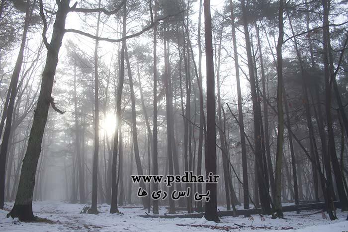 دانلود بک گراند جنگل مه آلود برای عکس