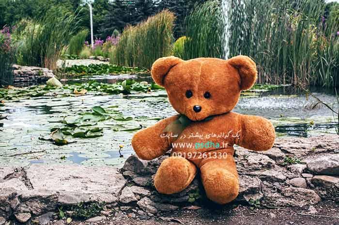 دانلود رایگان بک گراند خرس عروسکی و طبیعت