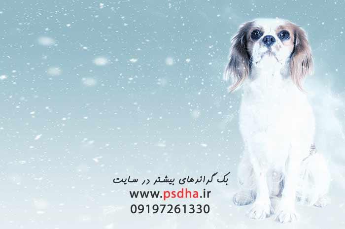 بک گراند با نمای زمستان و سگ
