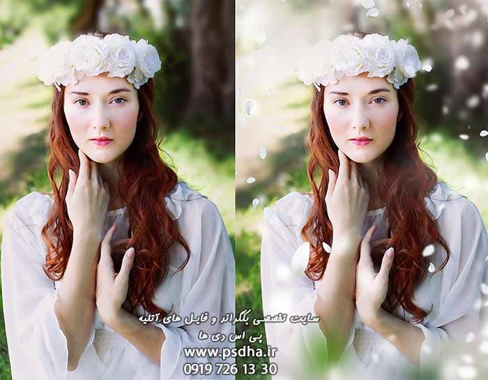 دانلود افکت گلبرگ سفید رز بصورت پوششی