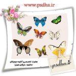 دانلود انواع پروانه های زیبا