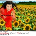 بک گراند عکس گلهای آفتاب گردان