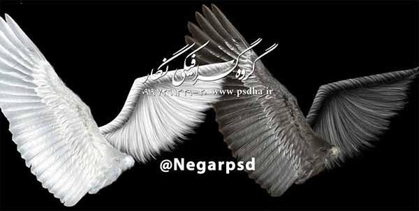 دانلود بال پرنده و فرشته psd